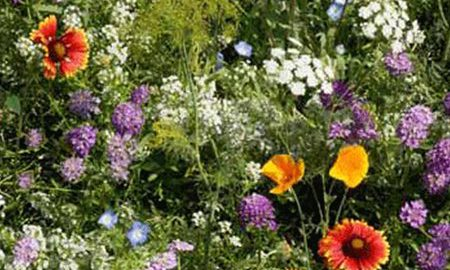 Low Growing Wildflower Seed Mix - 4 Oz - Mix of Annual & Perennial Wild Flower Garden Seeds